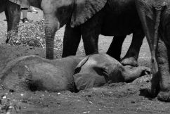 David Sheldrick Wildlife Project (26)