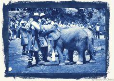David Sheldrick Wildlife Project (3)
