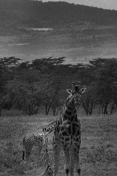 Lake Nakuru National Park (101)
