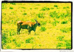 Lake Nakuru National Park (103)