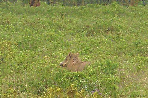 Lake Nakuru National Park (116)