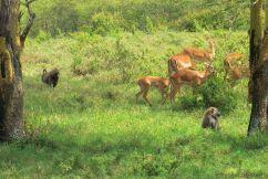 Lake Nakuru National Park (120)