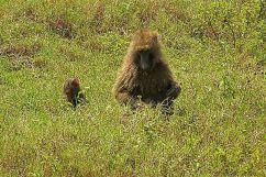 Lake Nakuru National Park (123)