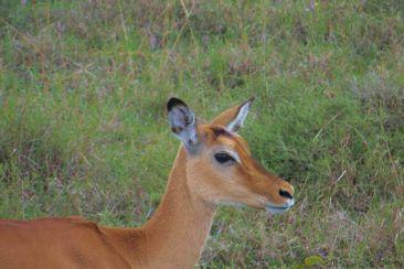 Lake Nakuru National Park (126)