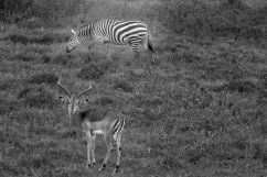 Lake Nakuru National Park (129)