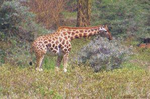 Lake Nakuru National Park (136)