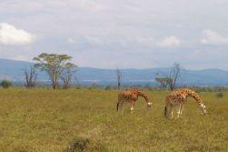 Lake Nakuru National Park (146)