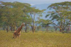 Lake Nakuru National Park (147)