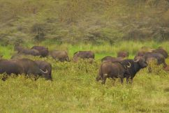 Lake Nakuru National Park (159)