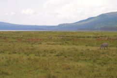 Lake Nakuru National Park (160)