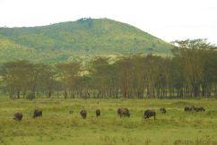 Lake Nakuru National Park (161)