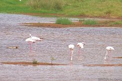 Lake Nakuru National Park (162)