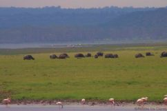 Lake Nakuru National Park (167)