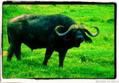 Lake Nakuru National Park (173)