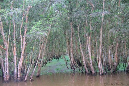Mangrove (27)