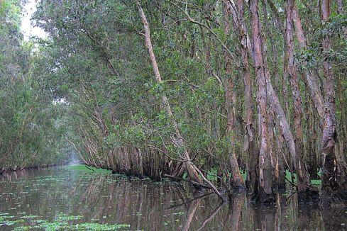 Mangrove (9)