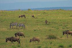 Masai Mara National Reserve (101)