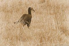 Masai Mara National Reserve (145)