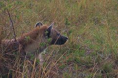 Masai Mara National Reserve (148)