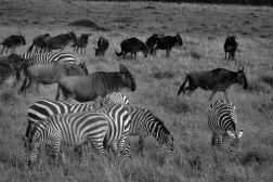 Masai Mara National Reserve (158)