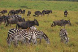 Masai Mara National Reserve (159)