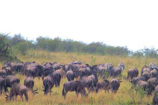 Masai Mara National Reserve (162)