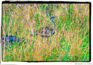 Masai Mara National Reserve (165)