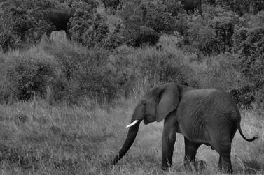 Masai Mara National Reserve (180)