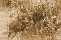 Masai Mara National Reserve (183)