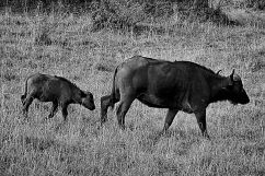 Masai Mara National Reserve (20)
