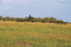 Masai Mara National Reserve (29)