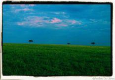 Masai Mara National Reserve (30)