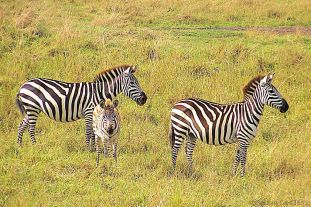 Masai Mara National Reserve (57)