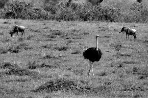 Masai Mara National Reserve (66)