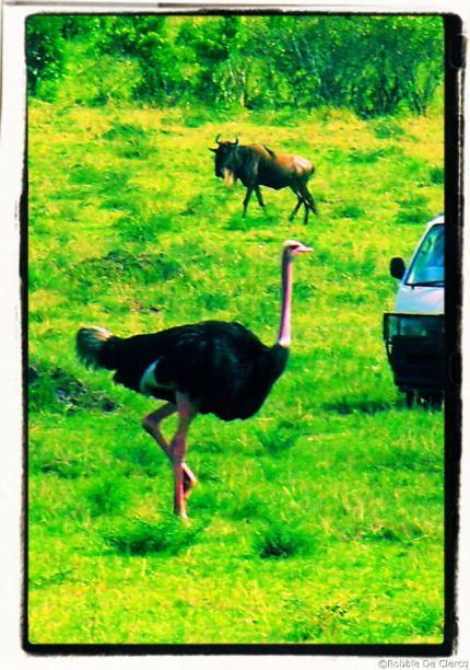 Masai Mara National Reserve (67)