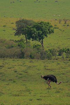 Masai Mara National Reserve (68)