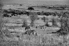 Masai Mara National Reserve (8)