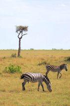 Masai Mara National Reserve (84)