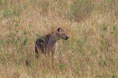 Masai Mara National Reserve (88)