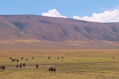 Ngorongoro (10)
