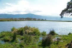 Ngorongoro (62)