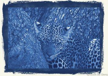 Serengeti National Park (134)