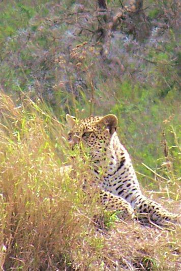 Serengeti National Park (144)