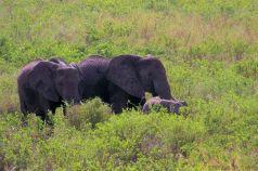 Serengeti National Park (189)