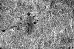 Serengeti National Park (23)