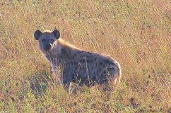 Serengeti National Park (236)