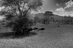 Serengeti National Park (36)