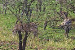 Serengeti National Park (40)