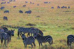 Serengeti National Park (79)