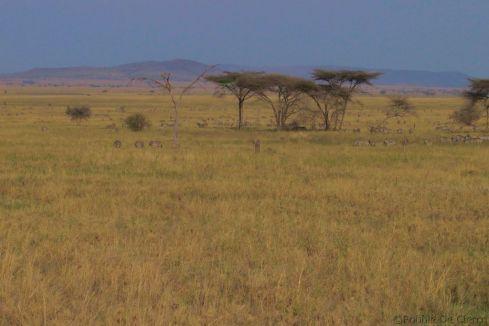 Serengeti National Park (92)